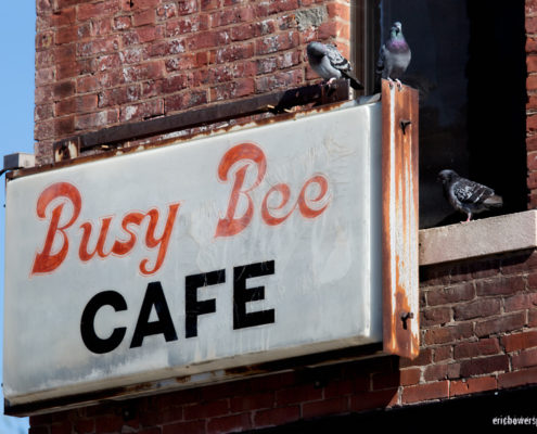 KC Crossroads Pigeons at the Busy Bee