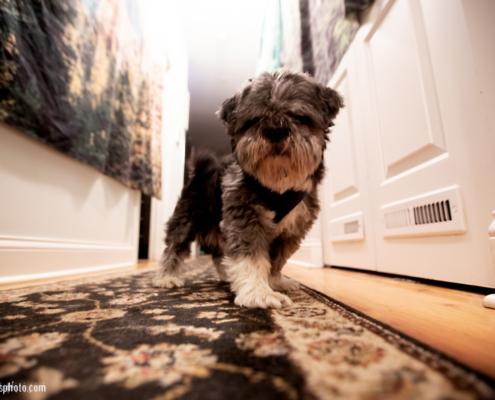 Dog of Chicago 2019